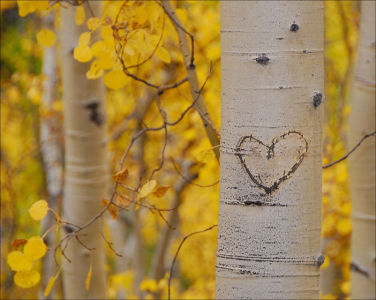 Peter Steele Photography Aspen Graffiti Heart