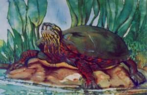 Turtle by Beth Erlund Johnson